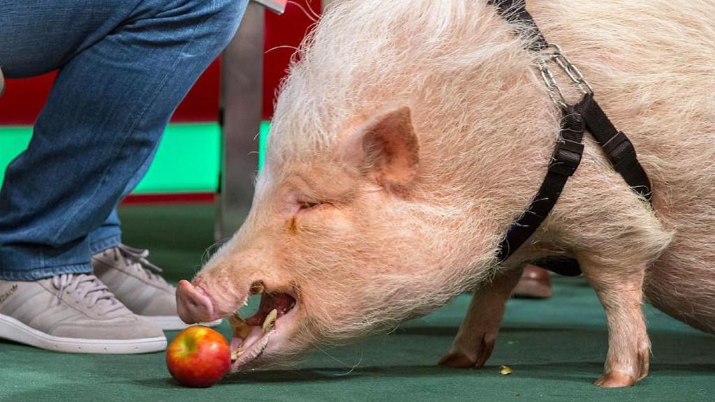 """Silbersalz Festival im Zoo – Vortrag: """"Tierische Jobs"""""""