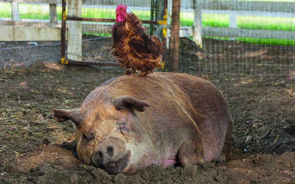 The Biggest Little Farm   credit: Farm Lore Films   Silbersalz2020