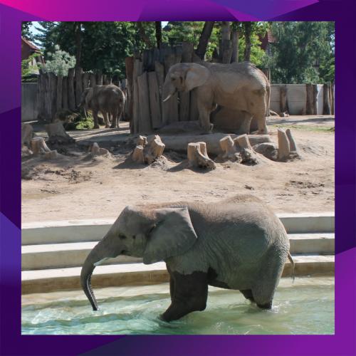 SIlbersalz Festival - Zoo Halle