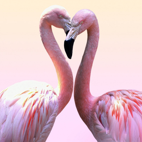 """SILBERSALZ Festival in the Zoo – """"The Science of Love"""""""
