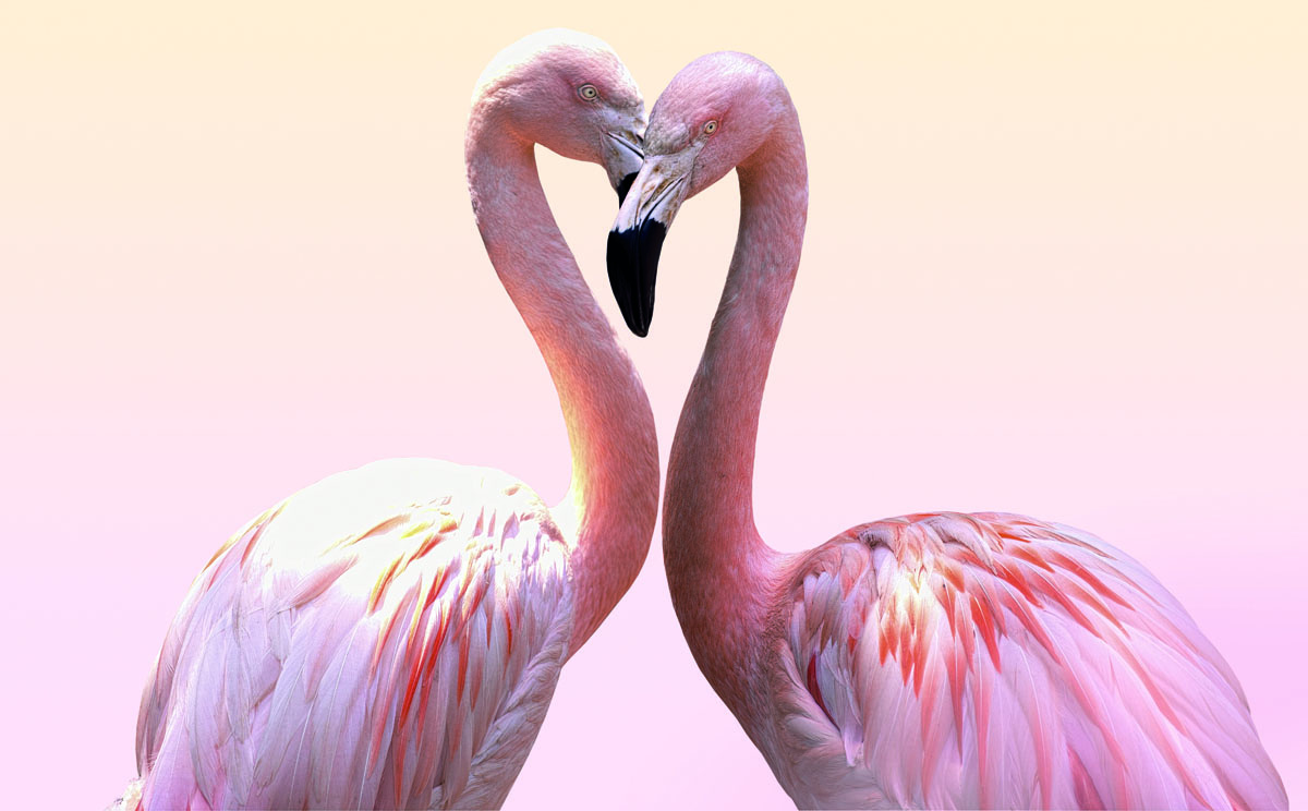 "SILBERSALZ Festival in the Zoo – ""The Science of Love"""