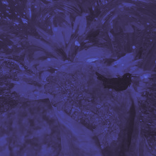 Songbird: a virtual moment of extinction