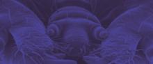 """SILBERSALZ Festival in the Zoo – Talk: """"Metamorphose of Love"""""""