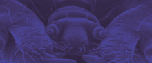"SILBERSALZ Festival im Zoo – Vortrag: ""Metamorphose of Love"""